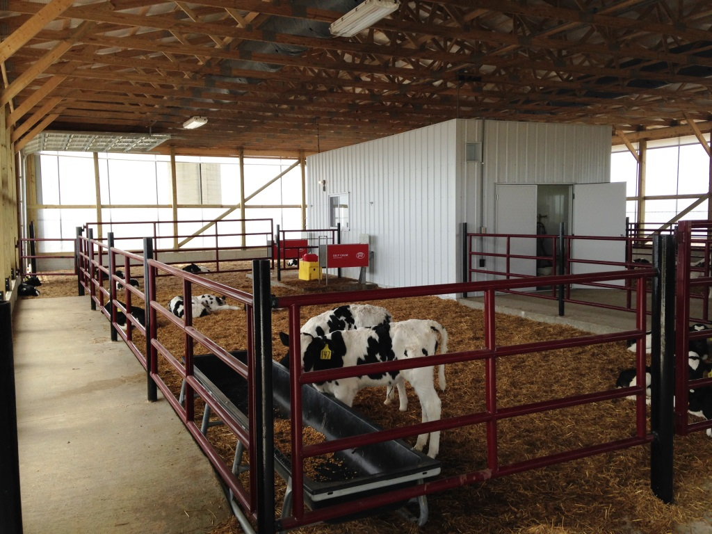 Lely Calm Calf Feeders